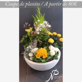 deuil-coupe-plantes-tons_jaunes_enterrement.jpg