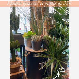 plantes_grasses.jpg